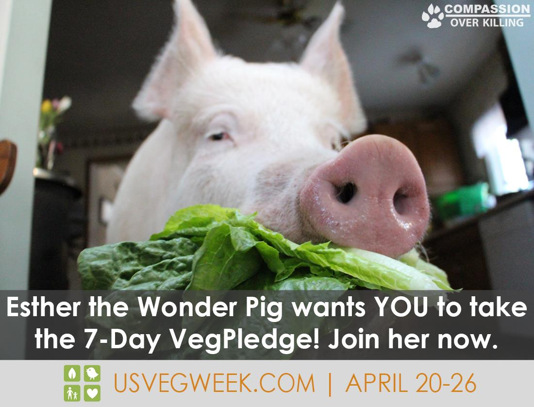 US Veg Week April 20 – 26: Take the Pledge